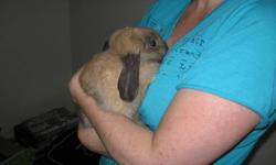 I have for sale a loppy eared rabbit and cage and accessories for sale-rabbit is approximately 8 months old and very affectionate-Asking $70 OBO-Call 705-498-7533 or email for info