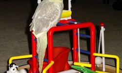 """Hello,   Byrdie Bird was lost and she is a pet cockatiel.  She will not survive the winter and we are worried sick about her.   She is very friendly and may come to you, answers to """"BIRDIE"""" or to """"SWEETIE"""" in a baby tone voice.   Look in trees, look under"""