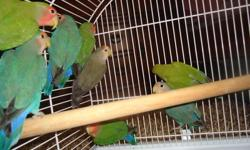 I have 8 baby love bird for sale different colors $40 each if u want plez call or email me tanks This ad was posted with the Kijiji Classifieds app.