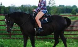 I am looking for an awesome home for my mare....I hate to get rid of her and the only reason I am is because I already have two more and I just don't have the time for three let alone one.  She is around 15hh and is an absolutle sweetheart.  Trailers