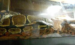 i have a year and a half old male het albino ball python and a two and a half year old female het albino ball bython they will be a mating pair within the next year they come with a 30 gallon tank they both live in has a corner water bowl magntic rock