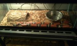 Needs a good home Male and Female snake healthy eats live or frozen mice , reason for giving them up want to upgrad to a bigger snake . Snakes comes with 1 -20gallon tank with metal screen 1-water dish 1-log hidout 1-habitat box 2-heat Pads 1-tempurture