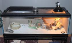 For sale is a male bearded dragon and his setup. comes with everything in the pictures except for the florescent lighting. Great for children. Hand trained. Low maintenance. The tank has blue paint on the outer sides and back but can easily be removed.