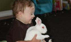 i have a male mini rex free to a good home. ollie is about a year old, he is all white with blue eyes. i rescued him from a horribly kept pet store, he was housed with another male bunny and this other male was the dominant bunny, and was actually chewing
