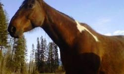 Misty 7 yr old buckskin QH mare Sire: Debs Deck Ross Dam: unpapered  Halter broke good bloodlines well built  Great riding horse is someone had the time to train her or else would be good broodmare  Loves attention and very friendly. Has feet done on