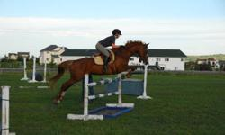 Mare for half lease in the springbank/bearspaw area. Would be suitable for an intermediate rider looking to ride in the hunter/jumpers. She is also a wonderful horse for pleasure and hacking.   Please respond to ad if interested. No off property leases,