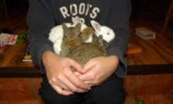 I have meat rabbit for sale, they are 6 weeks now and ready to go to their new home, various colors. thanks
