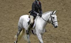 Problem solved is an 8 yr old, 13 1/4 hand medium pony hunter mare.  She has shown for the past 4 years in the Short Stirrup and Medium Pony Hunter Divisions.  In 2011 she was successful on the A Circuit in the Medium Ponies and qualified for the Royal