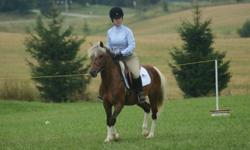 Mugsy is a medium pony for sale or lease. He has done some schooling and prelude shows in the summer. Jumps anything and is a great mover. He is great pony for kids like someone that knows how to use their legs. He is not mean at all does not buck, bite