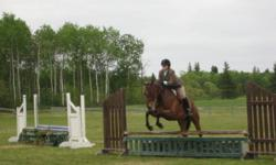 Milano, aka Northern Money, is a beautiful 7 year old registered Thoroughbred mare out of Sianora, by His Excellence. Milano has competed successfully in the hunter ring, shown from 2'3 to 2'9, equitation and under-saddle, consistantly places very well in