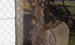 Asking 450 for the pair or best offer!! Very affectionate donkeys, good with kids, please phone for more info. 780 523 2580