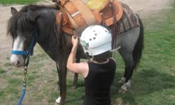 Boots is 6 years old. We've had her since she was 8 months old. My son wants to sell her so he can buy a bigger horse. She does tend to buck if she is not lead. She hasn't been ridden in a couple of years as my son thinks she is too small to ride. She