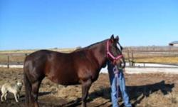 Molly- 11 year old quarter horse mare well broke to ride but she needs a intermediate rider only because i have no time for her and she just needs a refresher. She would make a great 4H horse with time, because she loves other horses and she just loves to