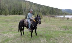 This mare moves forward on the trail. She is willing and confident. She has had training in the ring but prefers getting out and seeing the countryside. Her name is Lily and she is a 9 year old registered Morgan. She has been ridden primarily western with