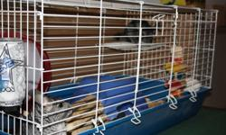 our mother (2 and a half maybe 3 years old) and daughter (year and a half) chinchillas are looking for a new home we just dont have the space for them in our new home we have tried over the last year to make room but its just not working out. asking $150