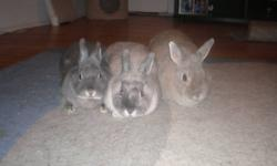 Mom - Bailey (2.5 yrs old) on the right her female baby - Mckenzie (1 yr old) in the middle her female baby - Jersey (1 yr old) dark colored on the left They have all lived in the same cage since they were born and I will not sell them seperately. Looking