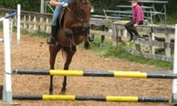 """National Show Horse """"Maddison Bay""""   Last chance to see this mare before she goes back to the coast.   2006 15.1hh Bay Mare   Trained english/western, loves to jump, was show last year but has had the summer off just for trail riding and a few western"""