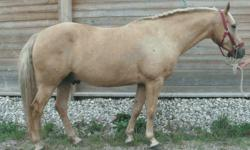 NEEDS TO BE GONE BEFORE JANUARY!  PRICE DROP FROM $4000!   If this ad is still up then he is still available!   Due to a large amount of e-mails here are some of the popular questions answered on here:   Tigger is a 15.1 hh, palomino gelding 7 years