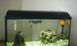 Great deal, the fish alone are worth over $100 and the fish tank has been well maintained with no prior problems. Busy future plans make it hard for us to give it proper attention, therefore, unfortunately we are looking to sell.   Fish tank features