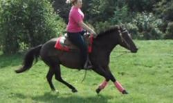 -- UTD. She had a vet check on September 13th 2011, and is in good health, good weight, and no under lying health issues or injuries. Macii is a 10 year old, arab x qh bay mare standing at 14.0 HH - just remeasured her and I was wrong, she is actually 14