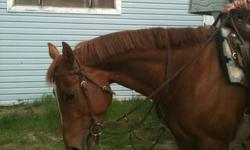 5 year old registered QH Appendix Mare. This Mare is *very sweet and smart. Great Bloodlines 15.2 hh well built, nice smooth jog , lope , canter. Likes trails Loves attention. Likes dogs and horses. Loves kids :) Good to tack up and load / farrier/vet .