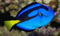 Forty Fathoms has just received a couple very nice and exciting orders. If you are thinking of adding something to your existing Aquarium or looking at starting a Saltwater tank.Just give us a call. We would be more than pleased to help you out anyway we