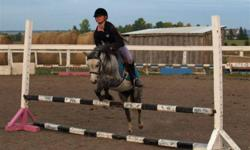 NEED TO SELL - VERY NEGOTIABLE Tink is a fun pony, full of energy and always so happy to work.  She loves people, can stand for hours to enjoy lots of brushing and always enjoys heading to the arena with the kids.  A perfect family pony.  She has her