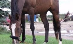 Hey my mare has a great personality, she is always happy when your around, she is beautiful, easy going, and just all around fun!!   I am looking to getting a third horse,  with that my mare will not get attention and I can not let that happen as she is