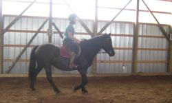 Beautiful 12 year Black Canadian Mare. 100% Pure with papers. She is microchipped and fully up to date on all vaccinations, farrier and deworming. Proven broodmare. Ridden by children and beginners. She lunges, cross-ties, and rides quiet and line drives.