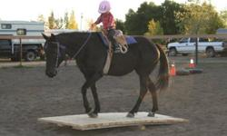 Hello Everyone! Starting on February 1st 2012 we are taking new clients for professional horse training. Basic training Western or English starts at $675.00 per month per horse, owner provides feed. Performance training Western or English starts at