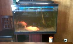Hi there I currently have a orange koi fish and giant goldfish for sale with entire system to go along...sad to see them go but hopefully they will go to someone who will take care of them...I have a huge tank filter...pump and nice ikea stand to go with