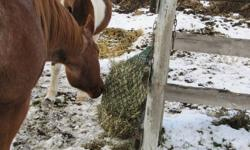 Put the present of good health in your horse's stocking this Christmas! Beware of cheap imitations by ordering direct from N.A.G. Bags at www.slowfeeder.com or by calling 250-308-6208 Slow hay feeder hay nets by N.A.G. Bag. (Natural Alternative Grazers)
