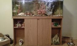 I have and Oscar with a 55 gl tank with oak stand .He comes with heater,2 50gl filters ,air pump and lots of accessories and 3 plecos please help me find a good home for him