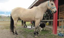 Ralph is a been there/done that laid back experienced trail horse. He is 100% sound and has not had a lame day in his life. He is a young 16 years quarterhorse and can work ten hour days in the mountains or on the ranch barefoot. He is a low maintenance,