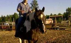 9 year old black and white paint percheron for sale this guy is almost 17hh a gentale giant easy keeper good feet loads into a trailer currently training to self load thunder is an awesome trail horse very brave in the bush he has had some time off and