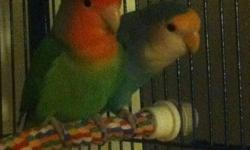 Hi, I have a pair of beautiful lovebirds.I cant keep these birds anymore because i am too busy with my schoolwork. These lovebirds are very active, love to play with toys and they just LOVE your attention. If you are interested in buying, please email me