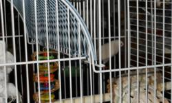 I have 1 pair of white finches, comes with cage.  Asking $75 OBO for pair & cage combined.