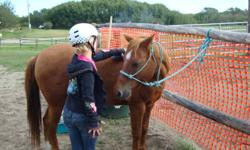 Pal is a 16 year old gelding, approx 12hh and is suitable for beginner children. This pony has foundered, with regular trimming and proper diet attention he is sound for basic walk, trot, and a some canter. Pal will be sold with his bridle, bit, reins,