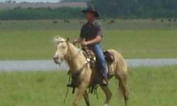 For Sale, a VERY gentle 4 year old Palimino Gelding.  He has been used all summer on a PFRA community pasture.  Lots of experience with roping, soritng cattle etc. Love him but we are making room for more horses next year. Call 456-2528 Located at