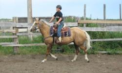 "This 5yr Reg. QH gelding has 4 white socks 'N a blaze. Reg. name ""Looking like Trigger"" He is destin to be something important. Many of his siblings are proven performance horse's in team roping, barrel racing, poles,breakaway roping, ect. Quiet and well"