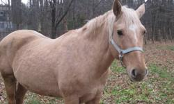 Owner selling her 4 year old Palomino Mare onyl because she is leaving to Germany soon and wants to find a speacial home for her horse. This horse is currently being trained for Western trail riding and is super patient and loveable. She does very well