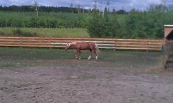 I am posting this ad for someone else.  The information I have been given is as follows:   Grade QH Palomino stud.  7 Years old, proven breeder.  Pal is not trained, but with a little time would do great.  Friendly in the pasture, comes for grain and does