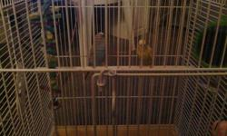 Two be beautiful parakeets. Both about 7 months old. One is blue and the other is yellow.comes with cage that fits two birds, bag of food, two in one mineral block and cuttlebone. Cage comes with two toys. Everything here for a healthy start.