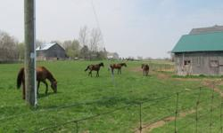 There is an opening for one, maybe two horses at private farm located on Hwy.#5 Dundas, Ontario. No indoor arena, but beautiful old barn with stalls where horses can come in during extreme weather conditions. Presently, herd consists of aged QH mare, and