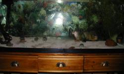 """I have four 7-9"""" long  red bellied piranahs in a 55 gallon tank with accessories for sale."""