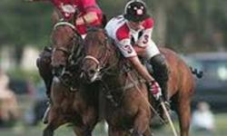 """Polo Clinic 2 Sessions Saturday January 7th & 14th @ 11 am $145 for both sessions This is a great chance to try something new The Sport Of Kings and Princes is now available to you Taught by founding member of the  """"Royal Winnipeg Polo Club"""" Gearld Levin"""