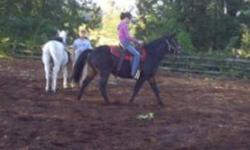 """Lady is a 13 year old Arab Quarter horse cross she has done everything. schooled to 3 feet in pony club , trail back country pack trips> good on roads and being pony""""d just for excersice shes a doll. has get up and go. very alert NO BUCK BOLT OR REAR!"""