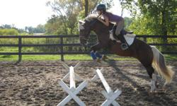 13hh pony for lease. Looking for someone who is interested in showing. He is a great pony has been to prelude show this summer and was great! nice calm pony to ride loves to jump! and can jump big. Please email to come see him. $175 for a part lease.