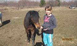 Sadly, it has come time to offer our pony to a new family.  Great personality and loves being out on the trails.  Good feet, stands for the farrier, is on a regular deworming schedule.  Rides both english and western. Our kids rode western with him. He
