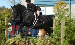 Several horses and ponies for sale, BIG price reductions for quick sales. Will also consider payment plans or leases on some of them. Lots of pics and videos on most horses - please email for website and video links. No indoor arena so soon we will be